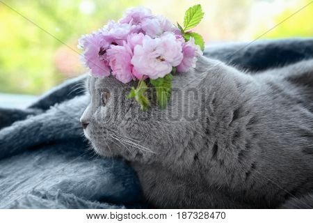 Cute cat with wreath lying at home