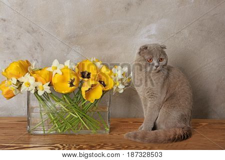 Cute cat with flowers at home