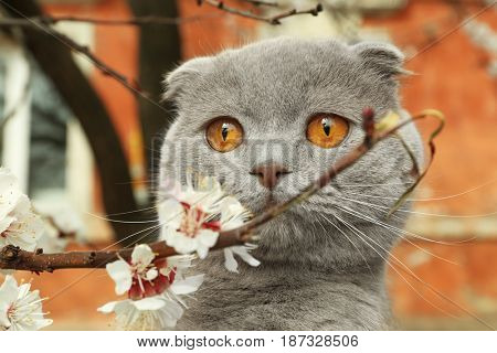 Cute cat with blossoming branch outdoors