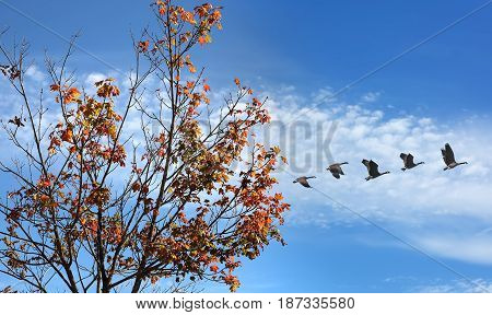 Birds flying against blue sky background environment or ecology concept