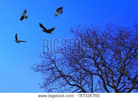 Black crows and tree on blue sky background