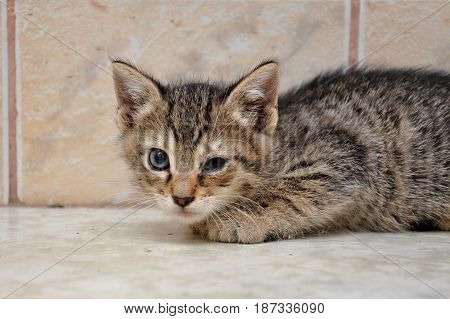 Scary abandoned kitty with sick eyes needs veterinary assist. Little kitten with sick eyes.