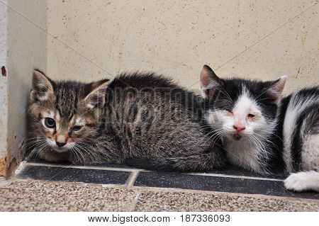 Scary abandoned kitty with sick eyes needs veterinary assist. Little kittens with sick eyes.