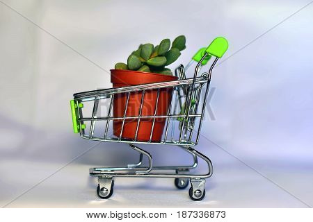 Closeup of shopping cart with pot and plant