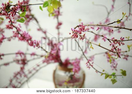 Glass vase with branches of blooming tree flowers on table