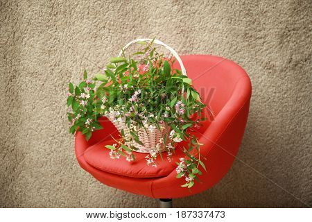 Wicker basket with branches of blooming tree flowers on red chair