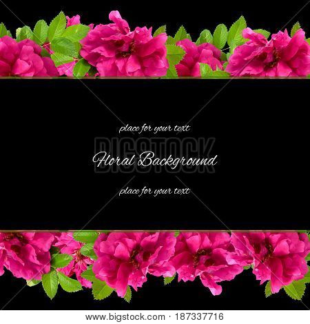 Background  Made Of Fresh Terry Rosehips  Flowers  And Place For Text