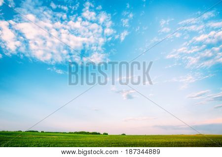 Countryside Rural Field Landscape Under Scenic Spring Blue Dramatic Sky With White Fluffy Clouds. Skyline. Agricultural Landscape
