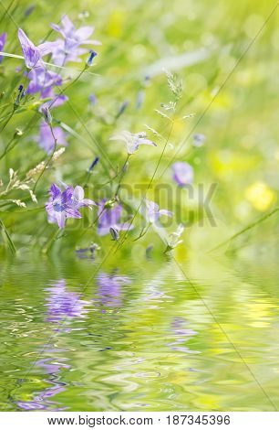 Blue bellflower on the sunny meadow reflected in the water surface with small waves