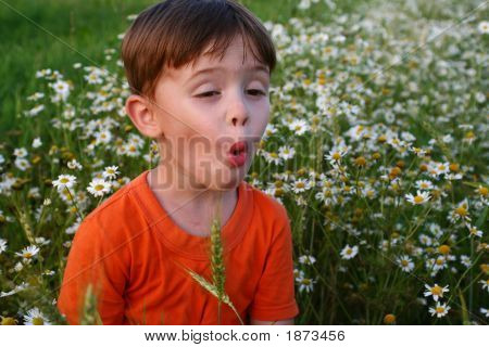Emotions Of The Child Among A Field Of Camomiles