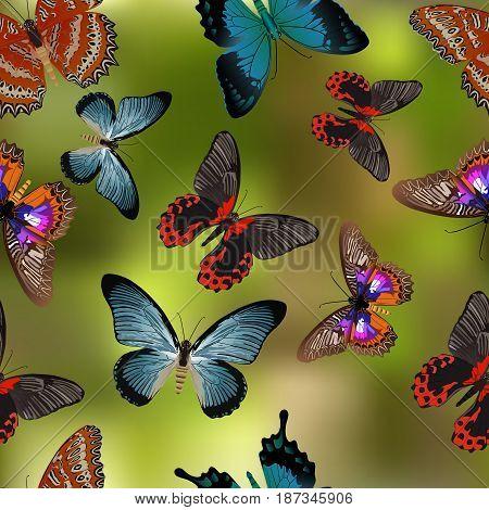 Seamless texture Butterflies. Realism style execution. Butterflies illustration