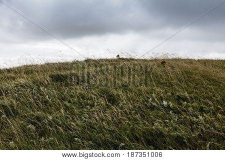 Meadow In Ireland