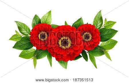 Red zinnia flowers arrangement isolated on white background. Flat lay. Top view.