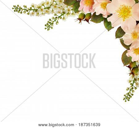 Wild rose flowers corner arrangement isolated on white