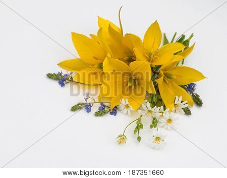 Bouquet of yellow Tulipa sylvestris and forest flowers on a light background
