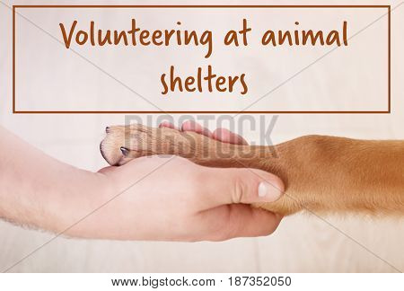 Concept of volunteering at animal shelters. Dog paw and male hand on blurred background