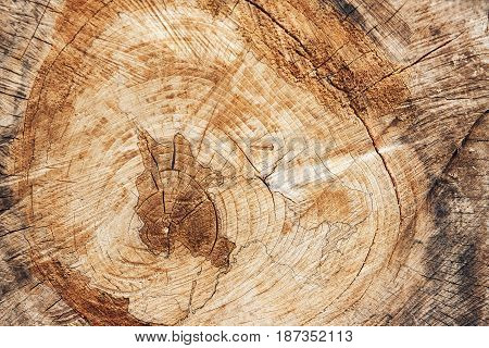 Background texture of old wood in a cut location