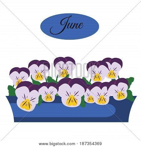 pansy indoor and garden flowers in pot. vector illustration. Calendar design element june banner