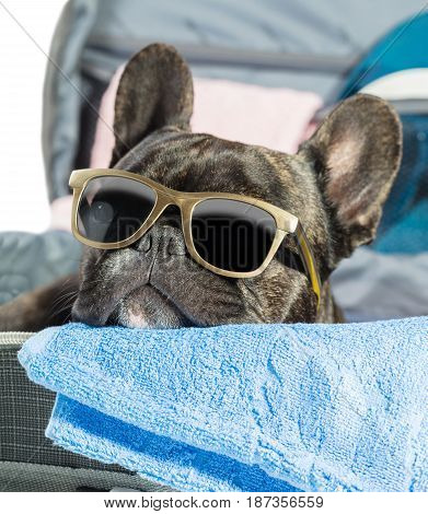 French bulldog with glasses lying in a suitcase close-up