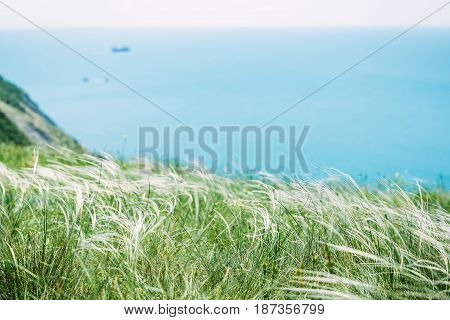 Cliff with frees and blue sea. Beautiful Grass and ocean