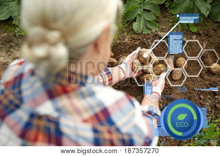 organic farming, agriculture and people concept - farmer with potatoes at farm garden
