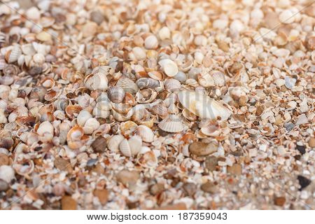 Seashore background with seashells. Natural textured surface