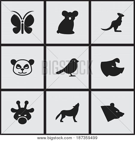 Set Of 9 Editable Zoology Icons. Includes Symbols Such As Australian Bear, Camelopard, Wolf And More. Can Be Used For Web, Mobile, UI And Infographic Design.