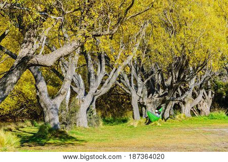 A romantic young couple sitting on hammock under the shade of trees which turning to yellow leaves in autumn watching view of Lake Pearson South Island of New Zealand