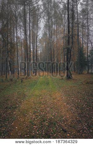 Autumn forest in overcast day, Altai region, Siberia, Russia
