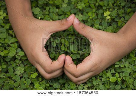 Little boy hands forming a heart