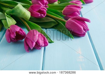 Beautiful flowers background. Violet tulips on blue wood with copy space. Bouquet on table, mockup for greeting card