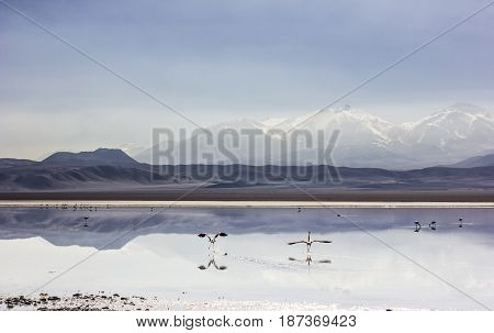 pink flamingos on mirror surface of mountain lake laguna rossa surrounded by high peaks in atacama desert in Chile