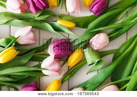 Colorful tulips scattered on white wood background. Bouquet of flowers