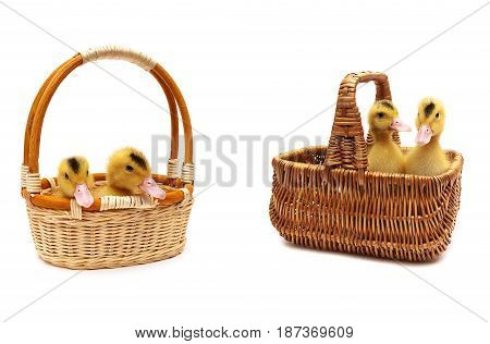 ducklings sitting in a basket on a white background. horizontal photo.