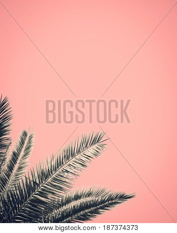 Abstract Palm Tree Leaf Design With A Pink Background And Copy Space