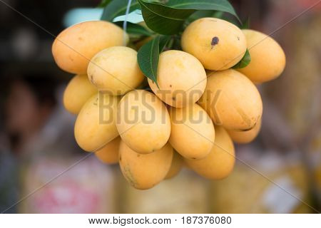 Closeup of ripe sweet marian plum ( Maprang Mayongchid Plum Mango) Thai fruit
