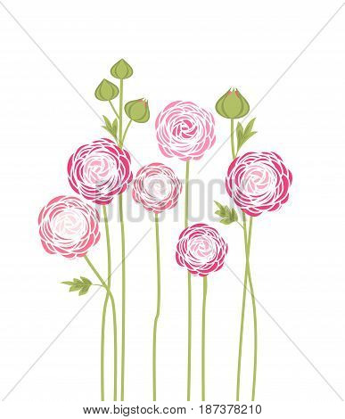 Vector illustration of ranunculus flower. Background with flowers