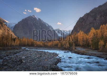 Mountain river on the background of autumn forest, snow capped mountains and blue sky, Altai region, Siberia, Russia