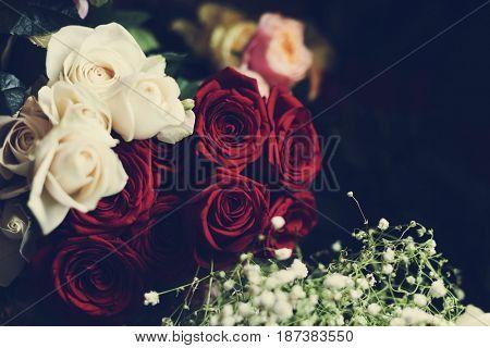 Flower romance fresh garden bloom
