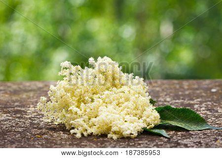 Bloom and leaves of elderflower (Sambucus nigra) on wooden board. Elderberry flower.