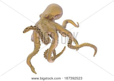 Octopus isolated on white background, 3D illustration