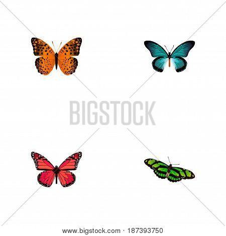 Realistic Pipevine, Danaus Plexippus, Azure Peacock And Other Vector Elements. Set Of Beauty Realistic Symbols Also Includes Orange, Monarch, Green Objects.
