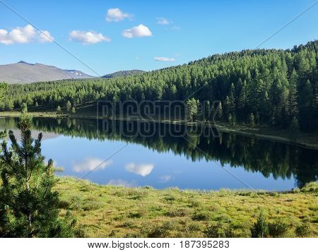 landscape of river in forest with mountains at horizon