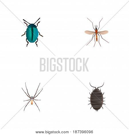 Realistic Bug, Spider, Gnat And Other Vector Elements. Set Of Animal Realistic Symbols Also Includes Mosquito, Spinner, Alive Objects.