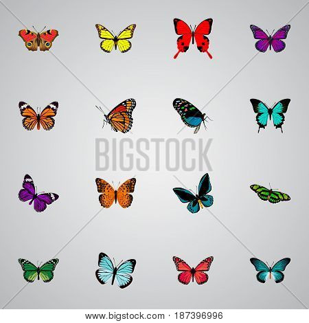 Realistic Birdwing, American Painted Lady, Danaus Plexippus And Other Vector Elements. Set Of Butterfly Realistic Symbols Also Includes Monarch, Brown, Beautiful Objects.