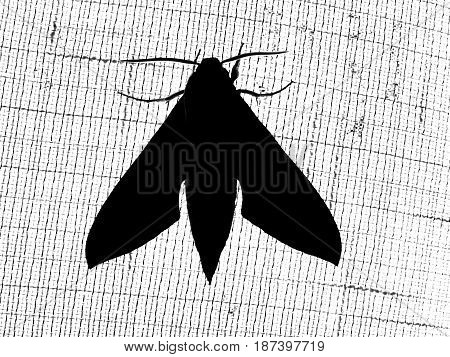 photography of the monochrome scene of the silhouette moth sitting on blind
