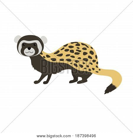 Marbled polecat Vormela peregusna on white background. vector illustration