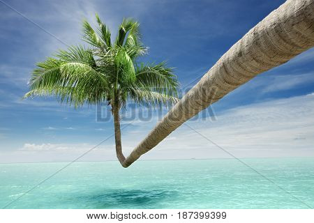 View of nice tropical palm bending over the ocean surface