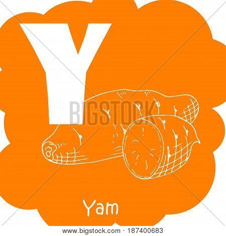 Vector vegetable alphabet for education. Illustration for kids. Letter Y for Yam
