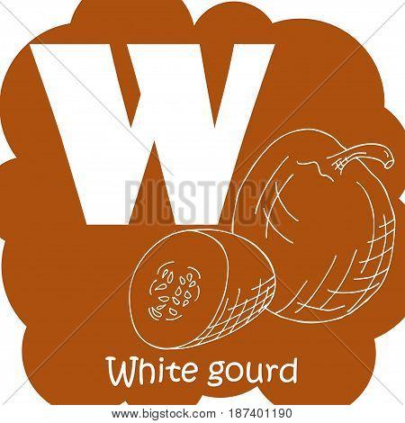 Vector vegetable alphabet for education. Illustration for kids. Letter W for White gourd.